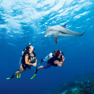 CUR06_2769_Dolphin_Divers-med_cc2